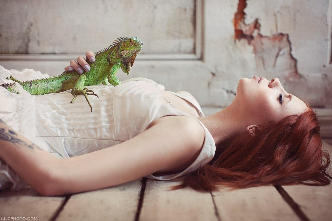 Идеи для фотосессии в студии с животными